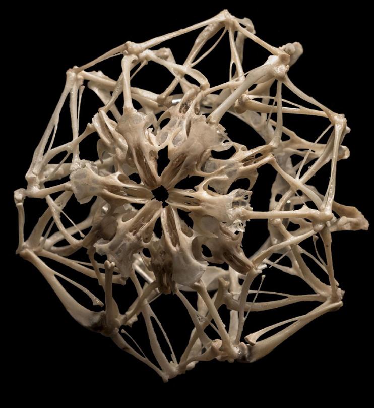 Vidrio y huesos, ganadores de los premios <em>Enjóyate</em>