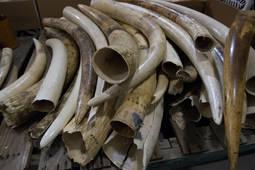 Frente común contra el uso de especies protegidas en joyería