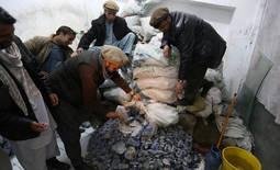 El <em>oro azul</em> de los talibanes en Afganistán