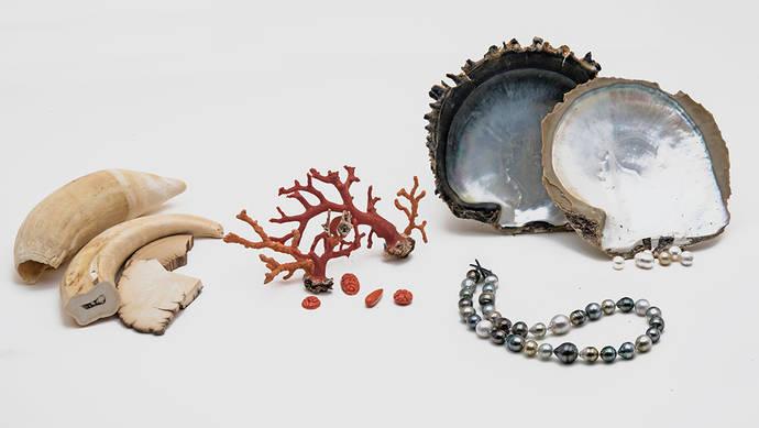 Un laboratorio profundiza en el ADN de las gemas orgánicas